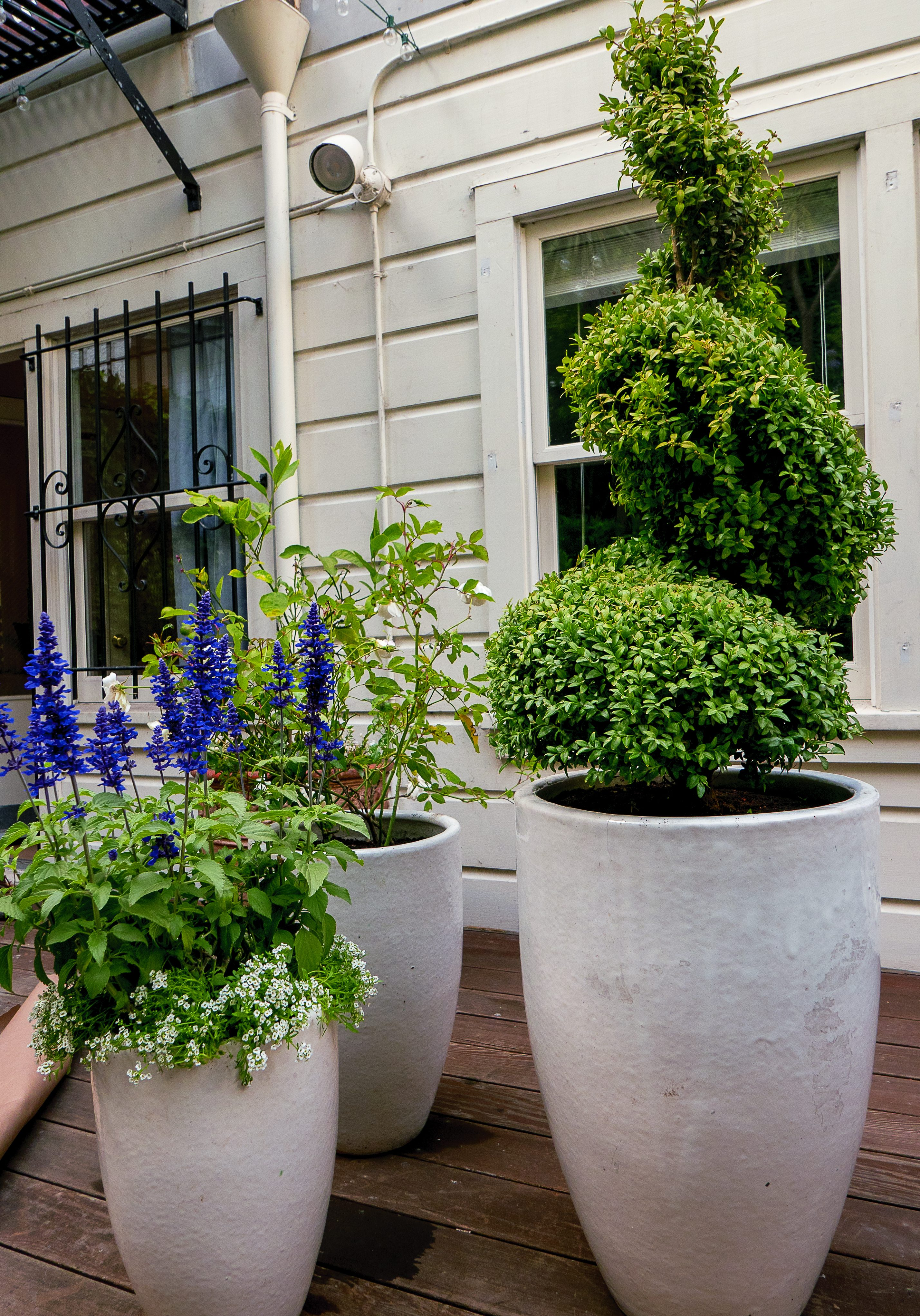 Pacific heights-10